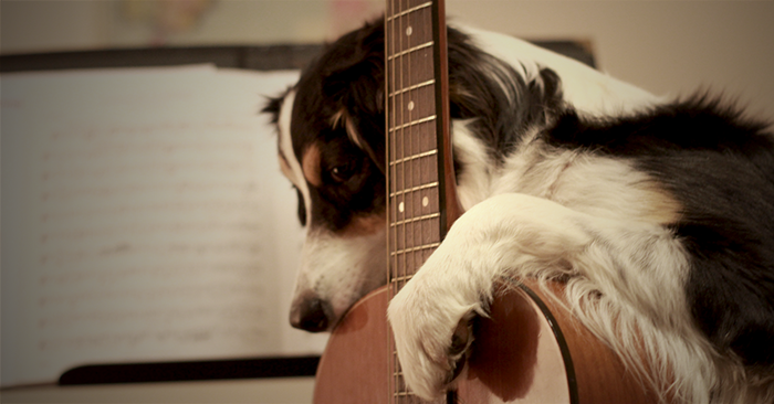 The Secret to Teaching Improvisation: Work Like a Dog